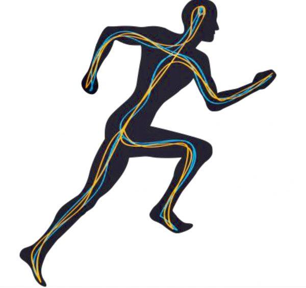 Run Physiology